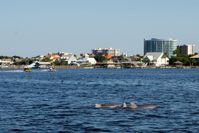 caribe marina gulf shores whale watching
