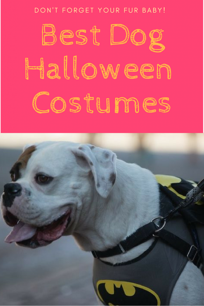 best-dog-halloween-costumes