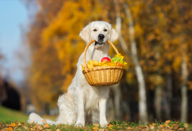 fruit treats for dogs
