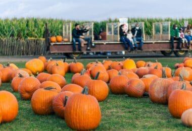pumpkin-patch-atlanta-roamilicious